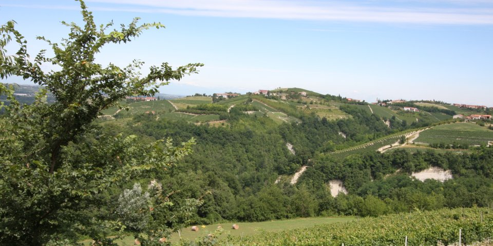 The beautiful view over the property's Dolcetto vineyard to the Langhe hills beyond