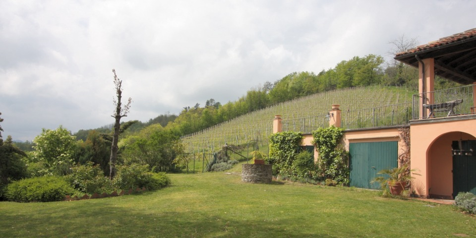 The garden with the vineyard beyond